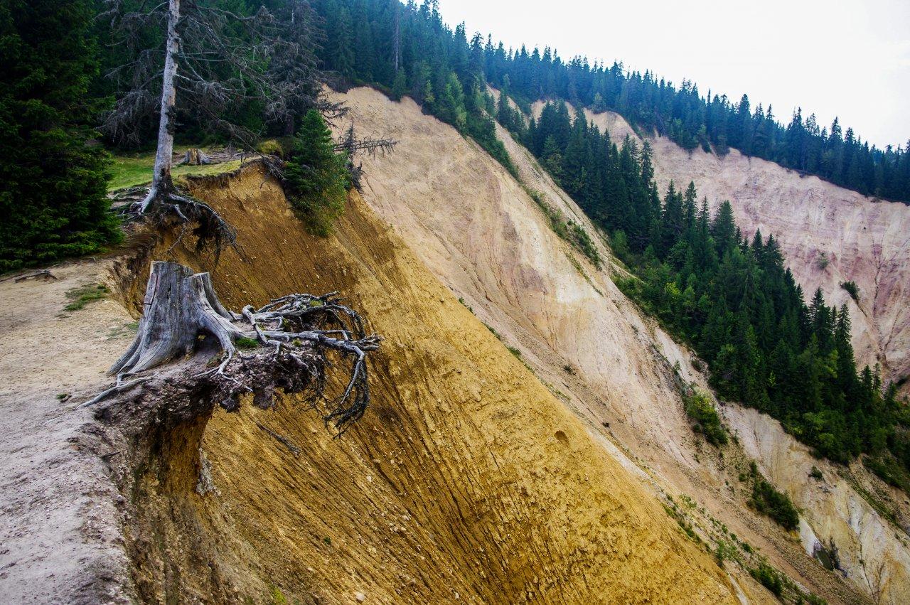 A folyamatosan hátráló beszakadás a fákat sem kíméli