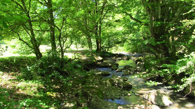 A szalonnasütő hely melletti patak. Gyönyörű szép...