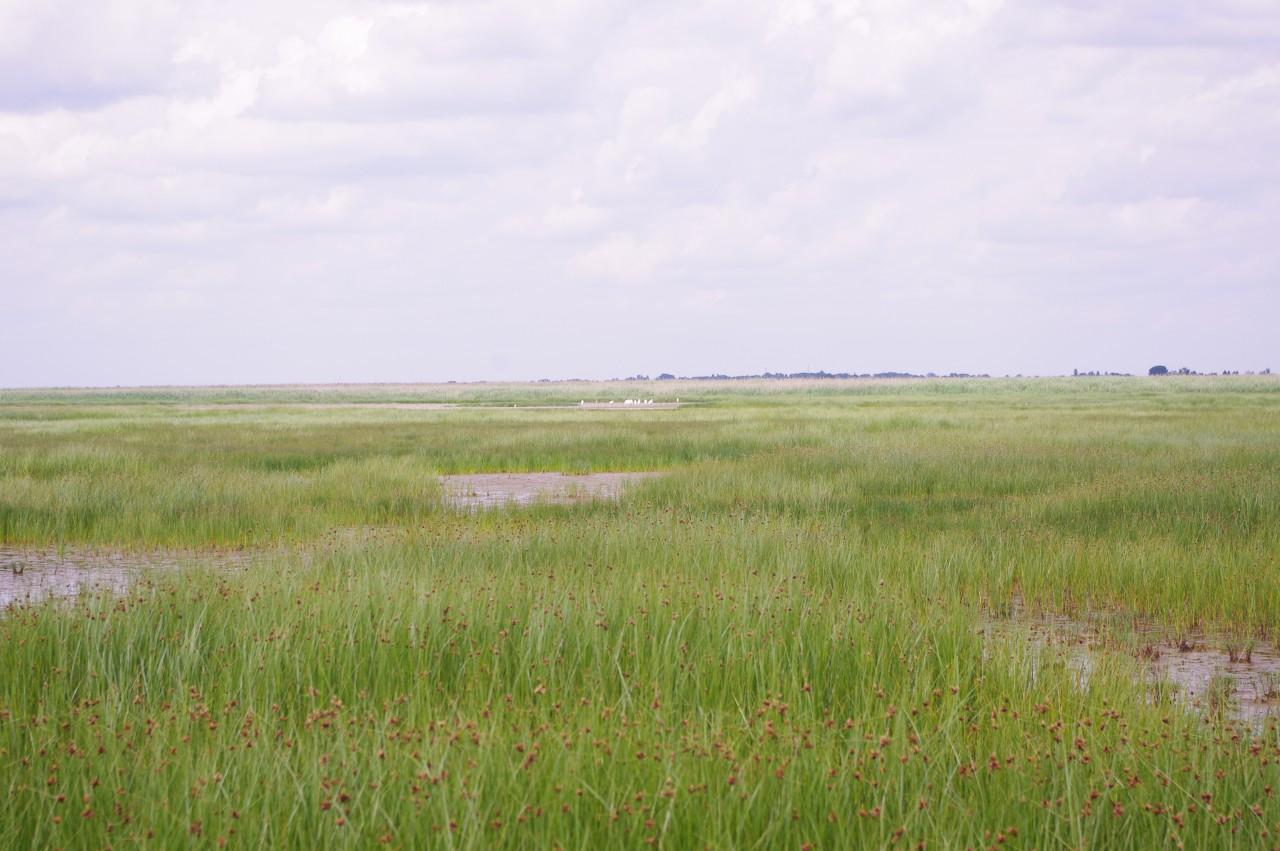 A Kiskunság mocsaras területe.