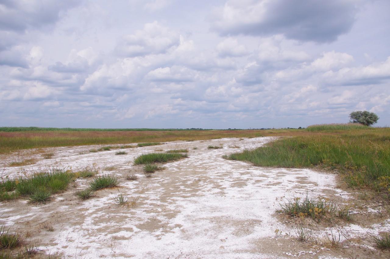 A kiskunsági szikes talajon kiült só.
