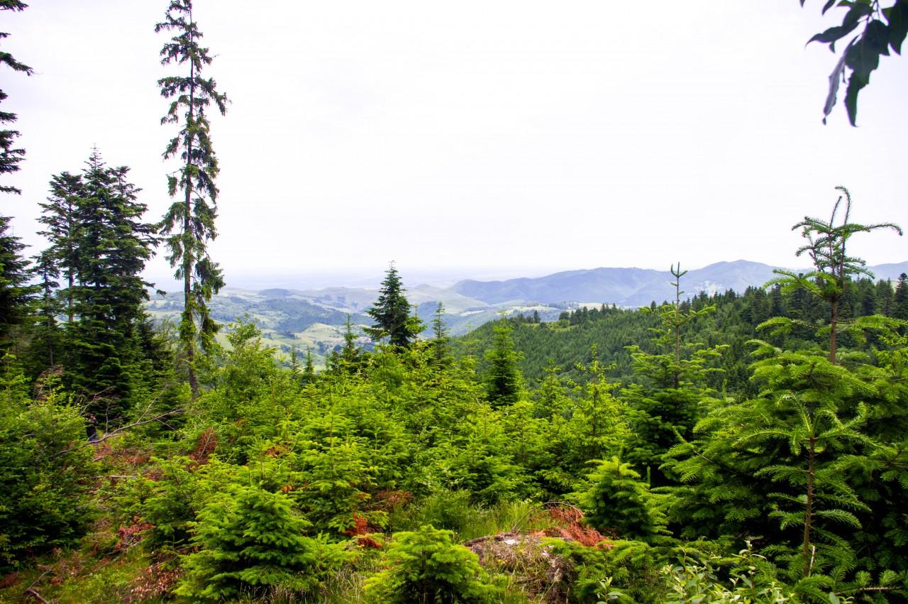 Kilátás a Vigyázó csúcsához közel lévő út kanyarulatból