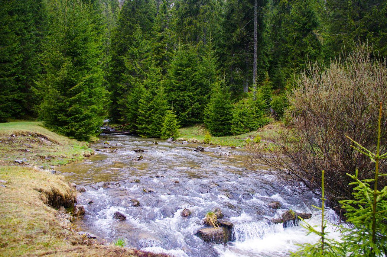 A Ponor-réti karsztforrásból eredő patak