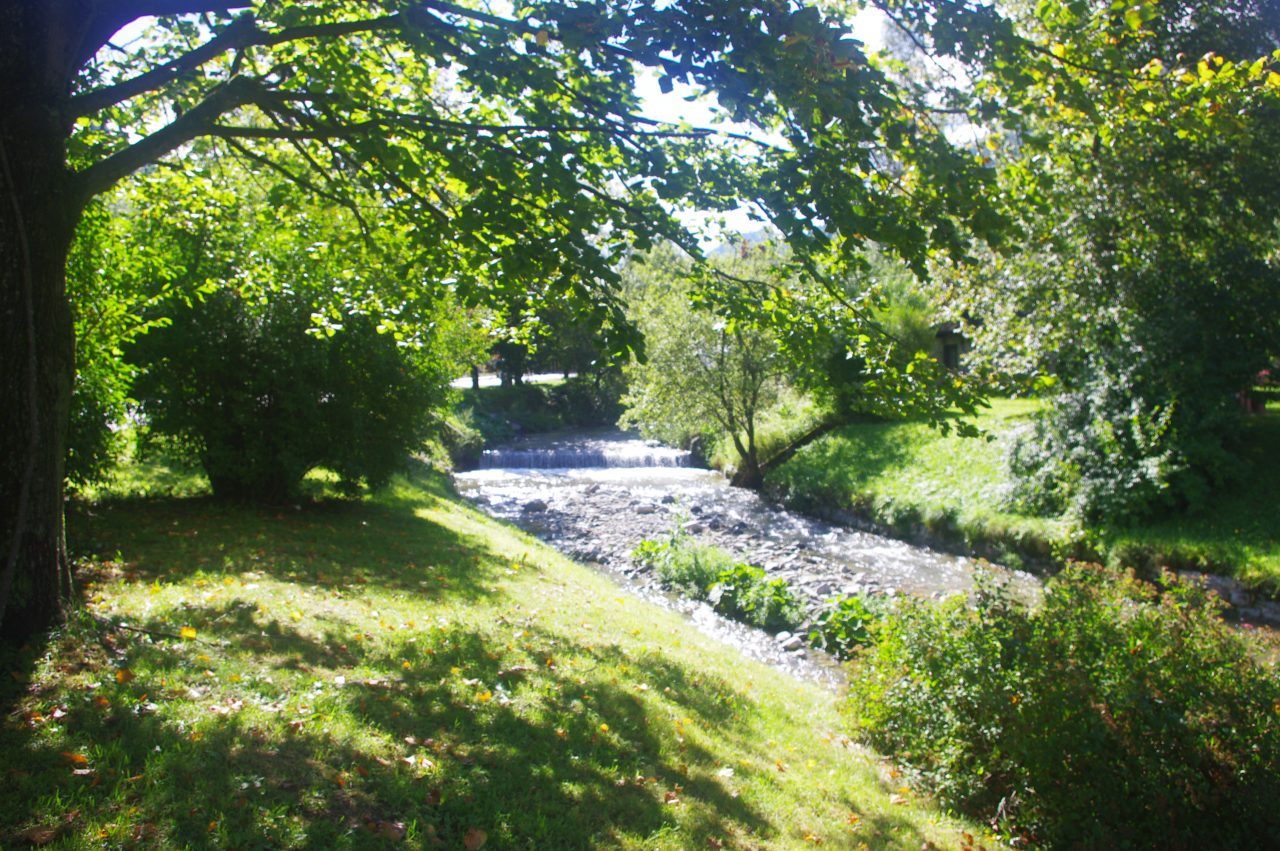 Javorski potok patak