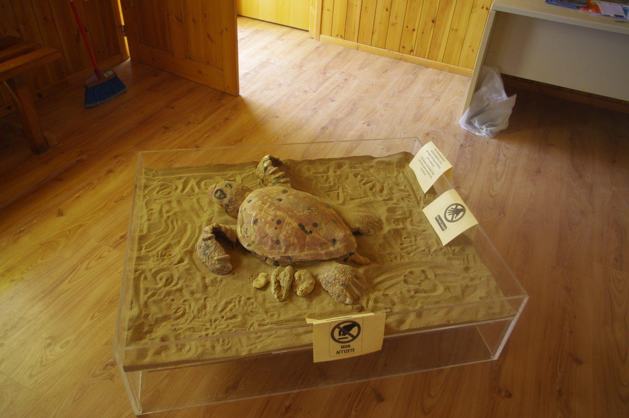 Kiállítás a teknősök védelme érdekében.