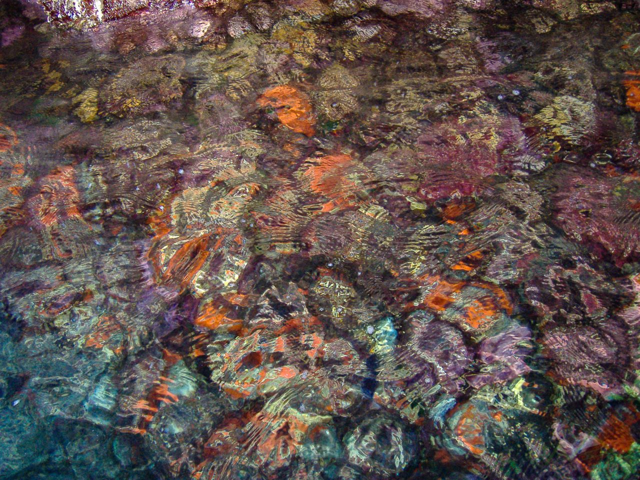 Ritka koralzátony